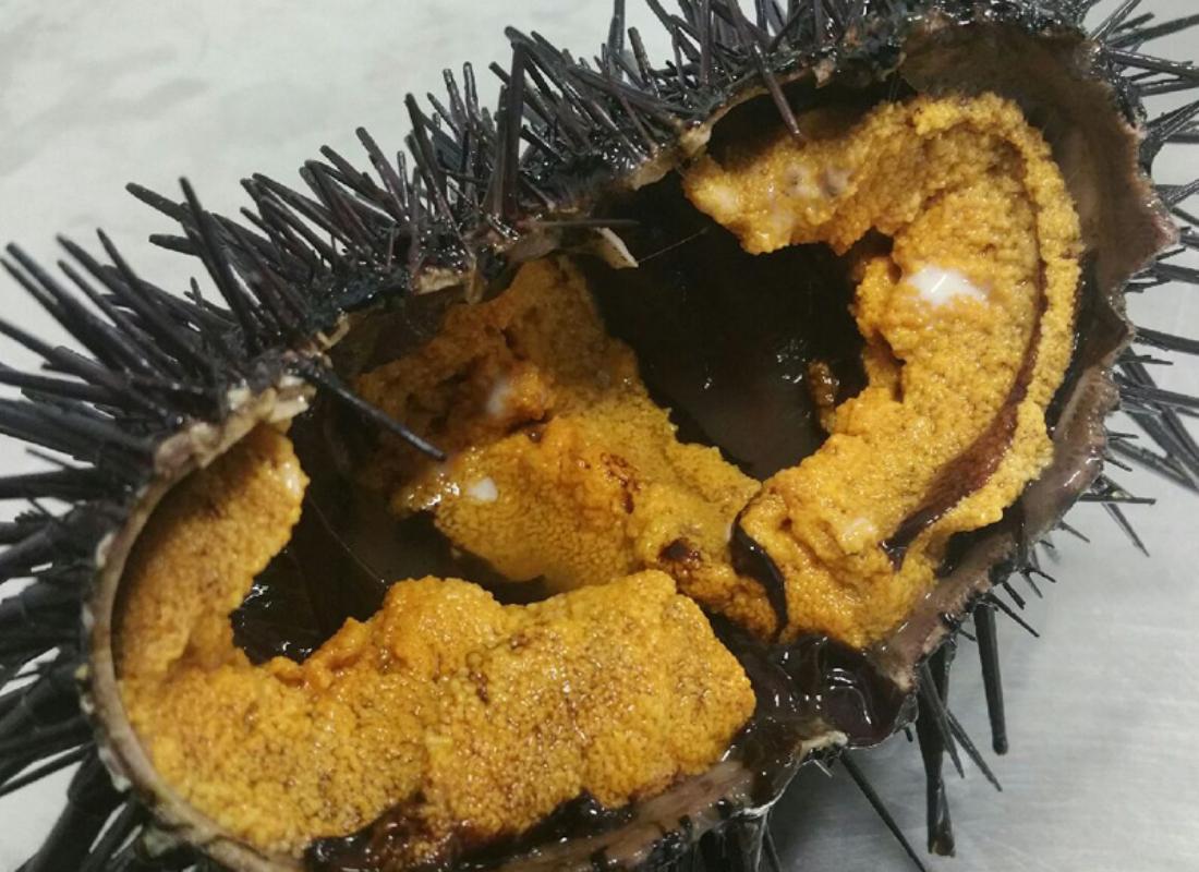 Baja Sea Urchin